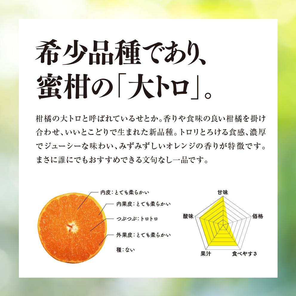 そらせとか 愛媛産みかん/訳あり3kg 【ご予約2022/2/20〜順次発送】