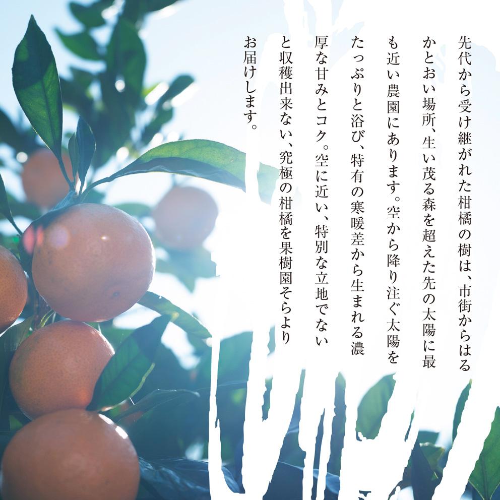 そら河内晩柑【農家直送/さっぱり甘み】4kg 送料無料