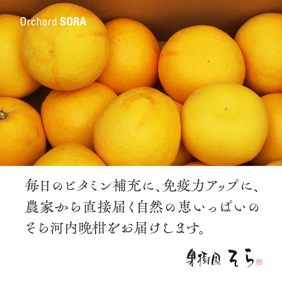 そら河内晩柑【農家直送/訳あり】4kg 送料無料