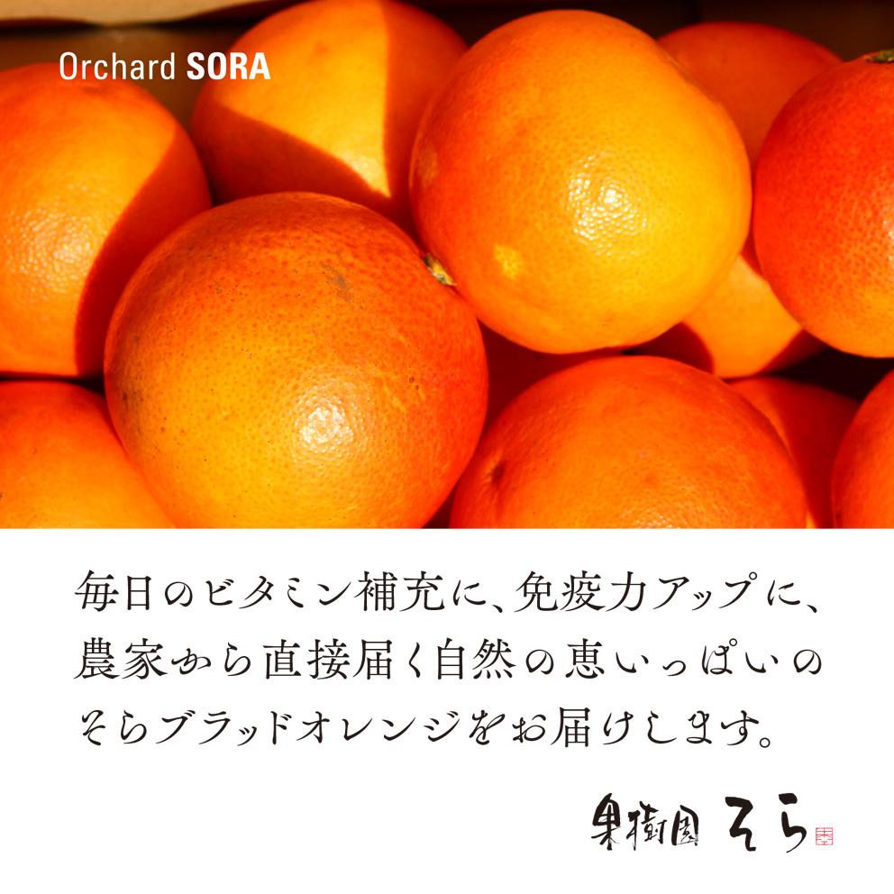 そらブラッドオレンジ【農家直送 /訳あり】3kg 送料無料