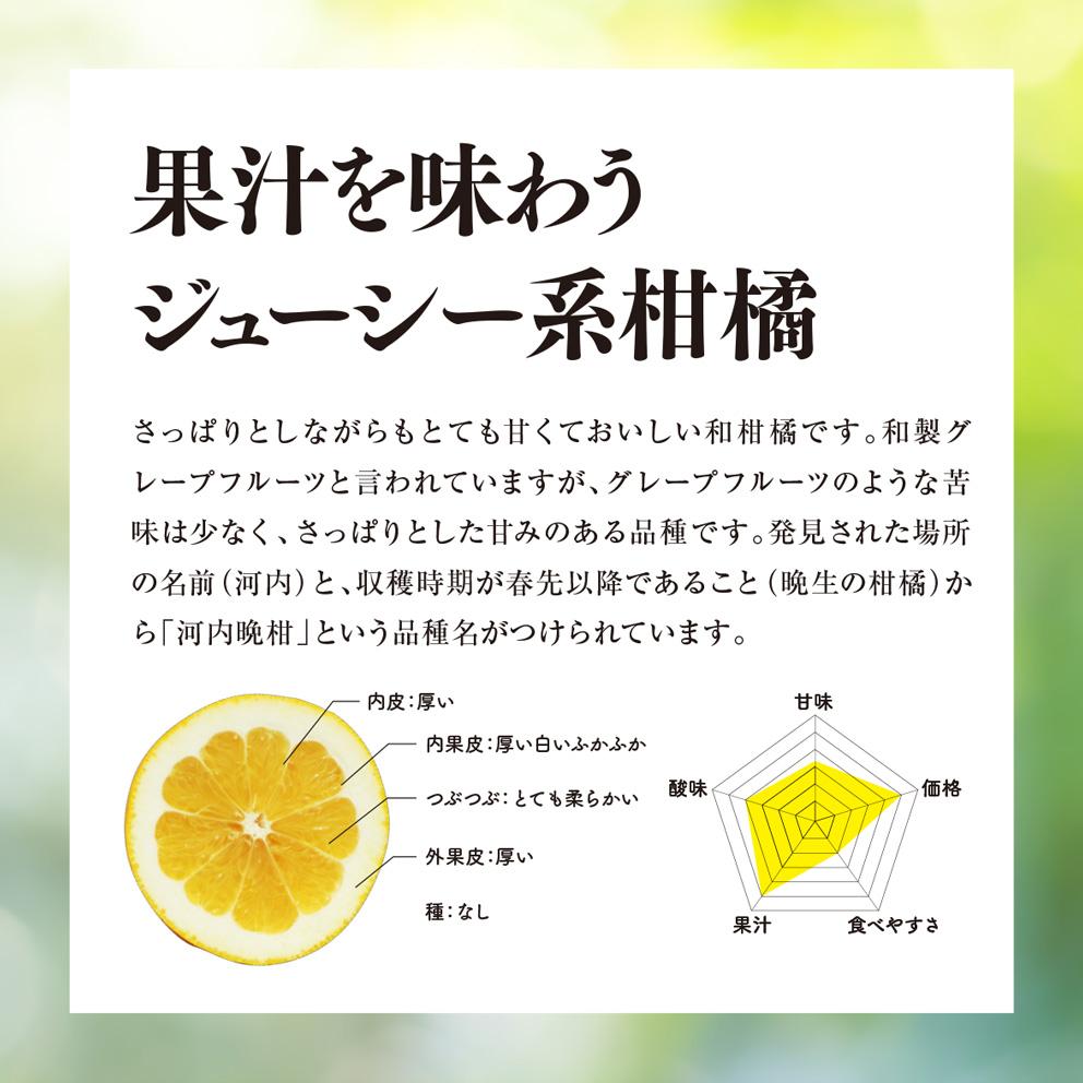そら河内晩柑【農家直送/さっぱり甘み】2kg