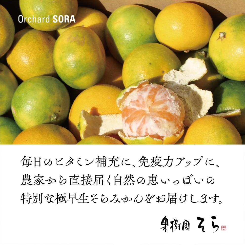そらみかん 愛媛産/極早生2.5kg 【9/20頃〜順次発送】