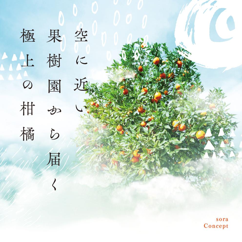 そらみかん 愛媛産/極早生5kg 【9/20頃〜順次発送】