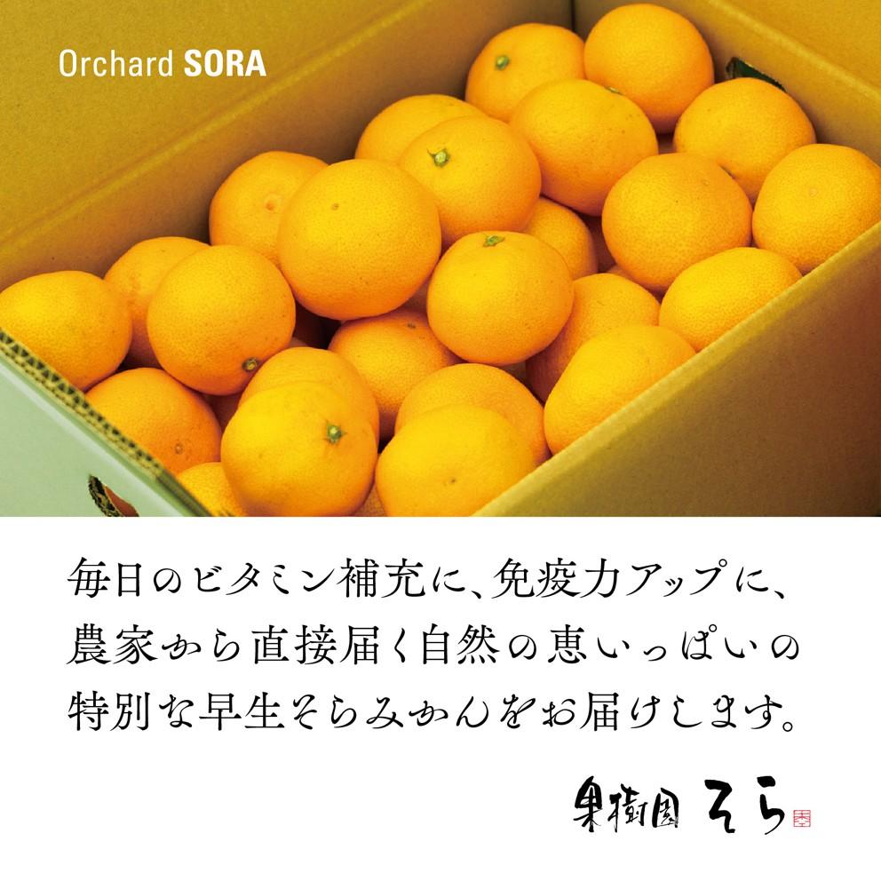 みかん 愛媛産/早生 2.5kg【ご予約11/1〜順次発送】