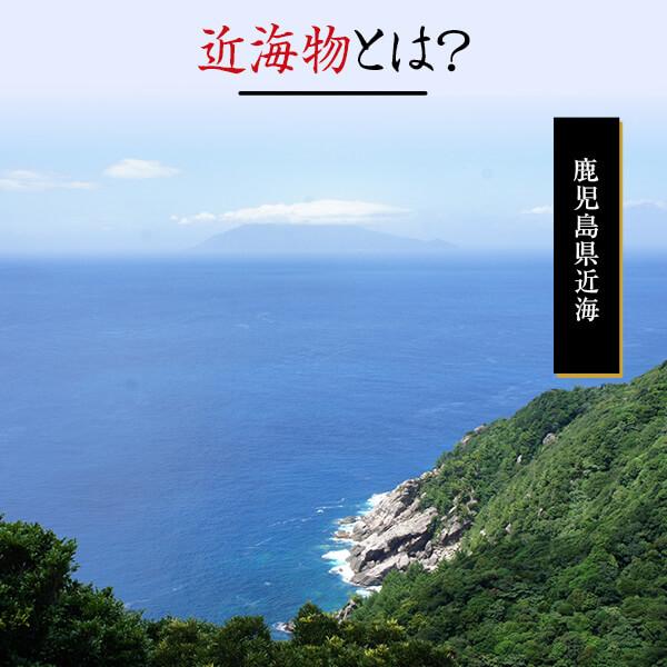 近海物 一本釣り 本枯花削り(100g) / 鰹節 かつお節   【送料別】