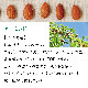 【送料無料】2,000円ポッキリ 素焼きナッツ5個セット<無塩/無添加/無油/アーモンド/くるみ/カシューナッツ/マカダミアナッツ>