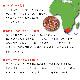 有機栽培ルイボスティー100包 【オーガニック スーペリアグレード 2g×100包 テトラ型ティーバッグ ノンカフェイン ゼロカロリー】
