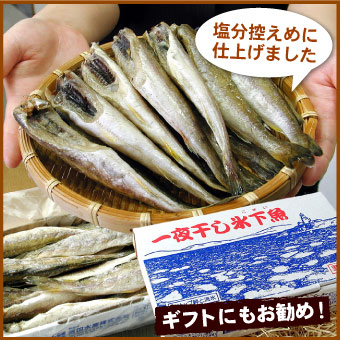 根室産 一夜干氷下魚(こまい)(コマイ・カンカイ)500g