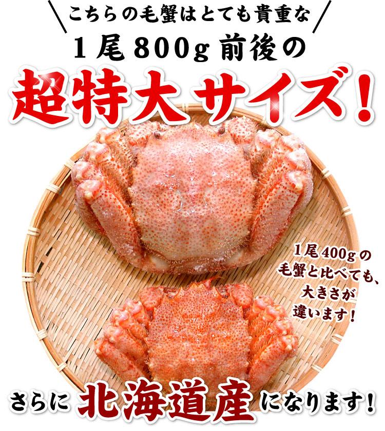 北海道産 毛ガニ 毛蟹 毛がに 特大 1尾 約800g前後 蟹 かに カニ 【送料無料】