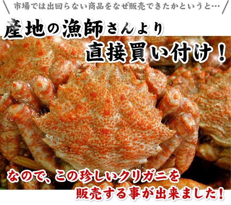 北海道産 子持ち クリ毛ガニ(クリガニ) (メスだけ詰め込み)約1kg(約10-15尾前後入り)【送料無料】