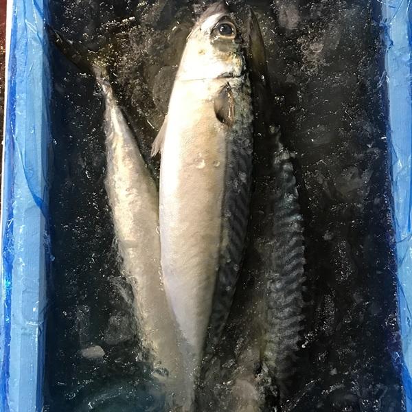 【カネム水産】旬のお魚セット