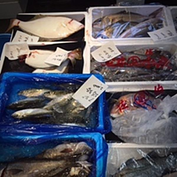 【カネム水産】旬のお魚セット 上物