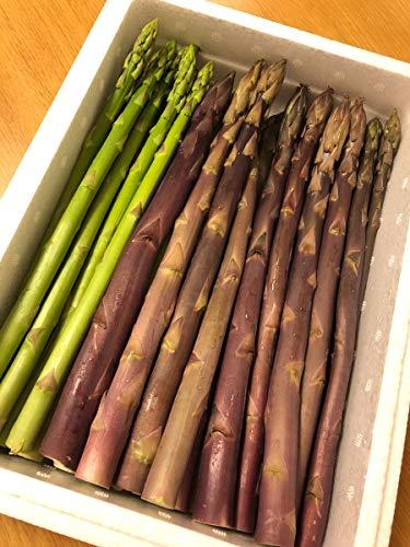 【紫&緑アスパラ1kg 付き】 シリカビヨンドリッチ 60本セット