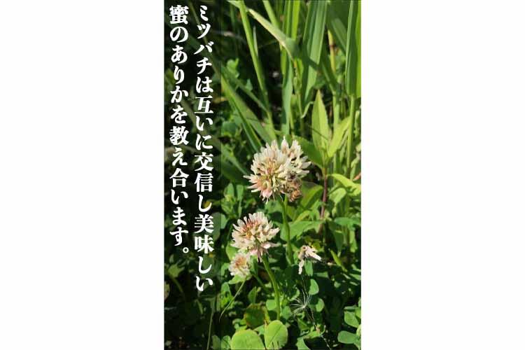 北海道産RawHoney トリュフチョコレート【6個入り】3箱セット◇冷凍便◇ 送料無料