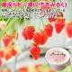 北海道 ソフトクリーム くりーむ童話 てづくり  ミルク いちご 2種 みるく 苺 イチゴ アイス 14個セット