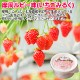北海道 ソフトクリーム くりーむ童話 てづくり  ミルク いちご 2種 みるく 苺 イチゴ アイス 30個セット