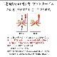 北海道産 いくら醤油漬け250g(化粧箱入) イクラしょうゆ漬け 送料無料