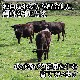 北海道産 ふらの和牛 黒毛和牛 肩ロースすき焼き しゃぶしゃぶ用500g グルメギフト 肉 牛肉 お取り寄せ 北国からの贈り物 肉の山本 送料無料 ※最短8営業日以降お届け