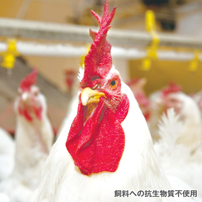 【IQF急速凍結品】ハンガリー産 冷凍 ハーブひまわりチキン 骨付モモ肉 240〜260g【6キロパック】