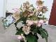 クリアランスセール★【6号鉢】クリスマスローズ・HGC「氷の薔薇・ピコティー」(ほぼ開花→花後の株)