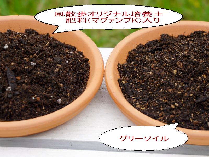 軽量!風散歩オリジナル培養土◆8L◆肥料(マグァンプK)入り