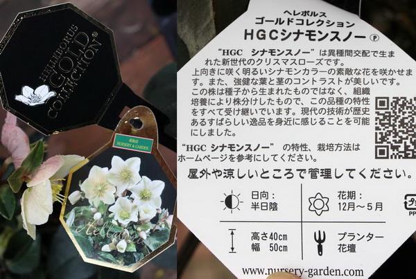 クリスマスローズ・HGC「シナモンスノー」4.5号鉢