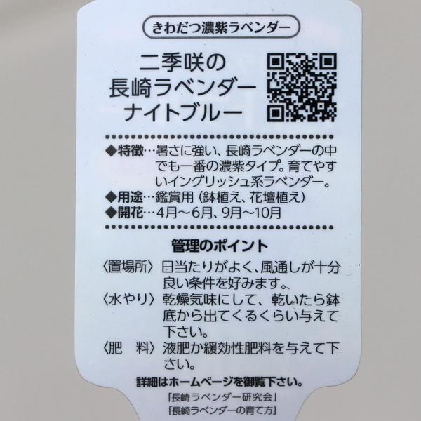 【3.5号鉢】イングリッシュラベンダー「ナイトブルー」