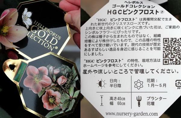 クリスマスローズ・HGC「ピンクフロスト」4.5号鉢