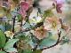 クリスマスローズ・HGC「ピンクフロスト」7号鉢