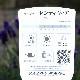 四季咲きイングリッシュラベンダー「センティヴィアブルー」(3.5号ロングポット)