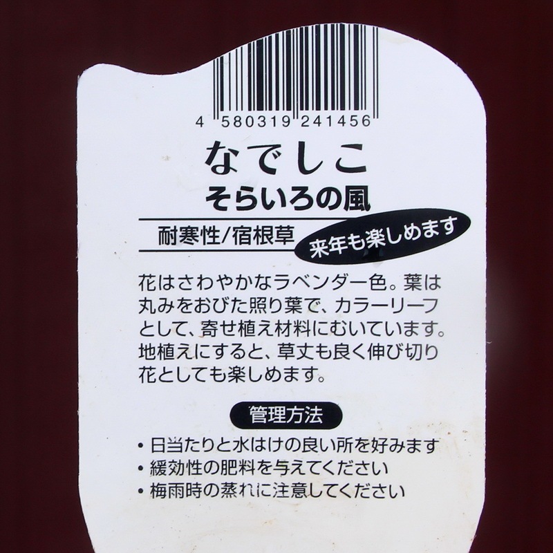 ナデシコ「そらいろの風」(3.5号ポット)