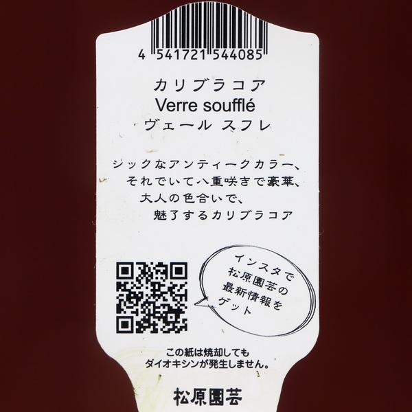 松原園芸さんのカリブラコア・ヴェールスフレ「2021年試作2-8」(3号ロングポット)