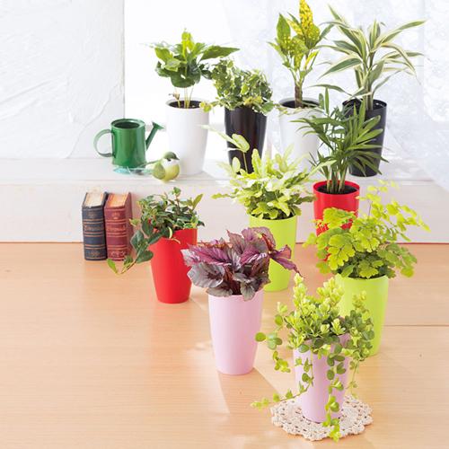 リブ ウィズ グリーン/観葉植物