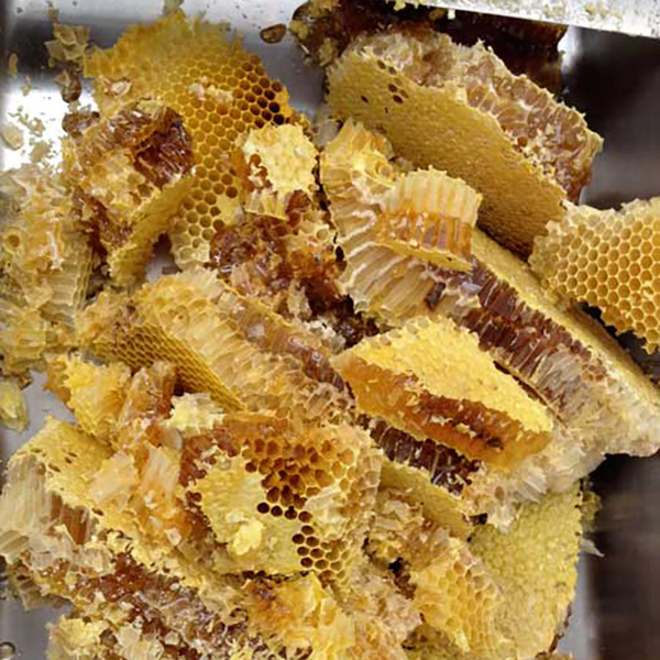 幻の日本蜜蜂のはちみつ