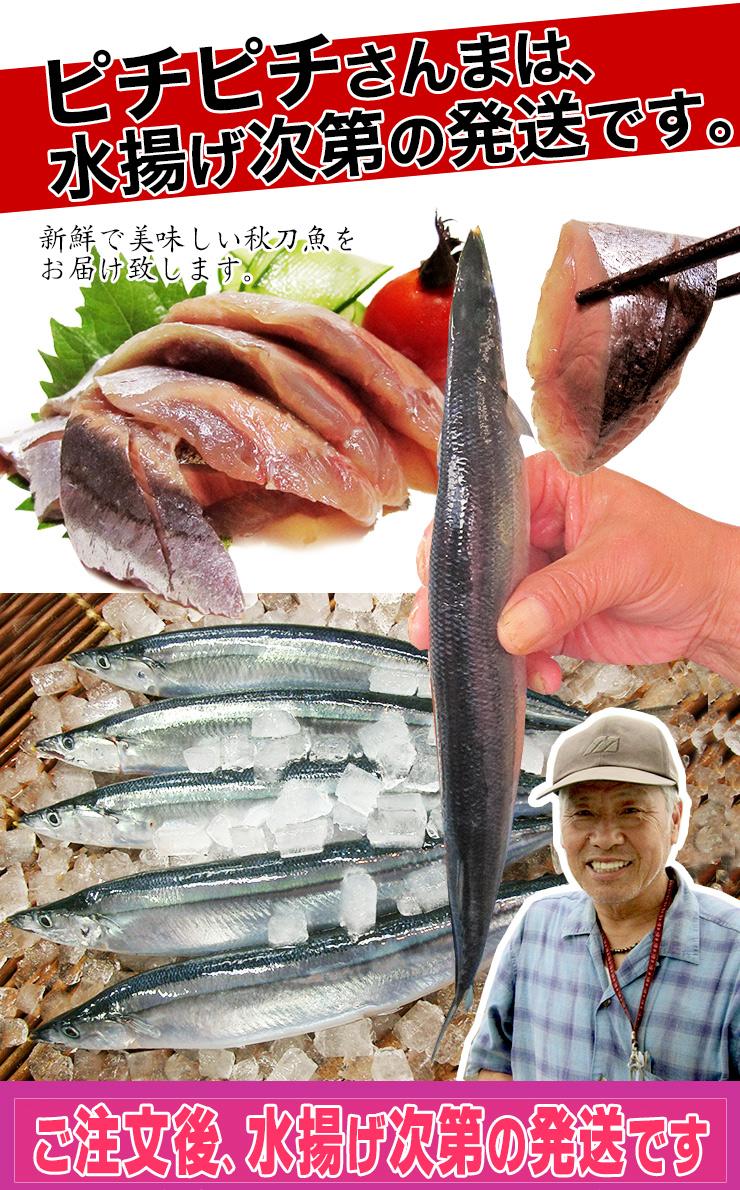 三陸産 生さんま (125g以上 20尾) 丸繁商店 気仙沼 三陸 秋刀魚 旬 水揚げ サンマ