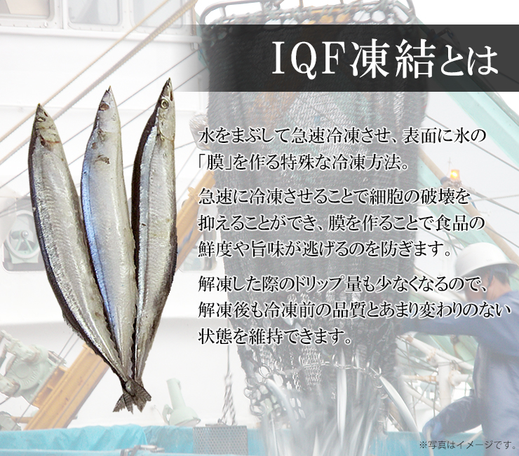 さんま 冷凍 5本 (1本130g以上)丸繁商店 IQF凍結 気仙沼 三陸 秋刀魚 お取り寄せ おかず