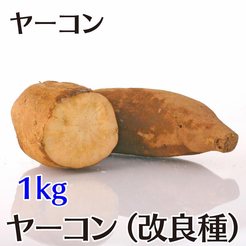 ヤーコン -  アンデスの乙女 または サラダオトメ 1kg[茨城]つくばヤーコンの会