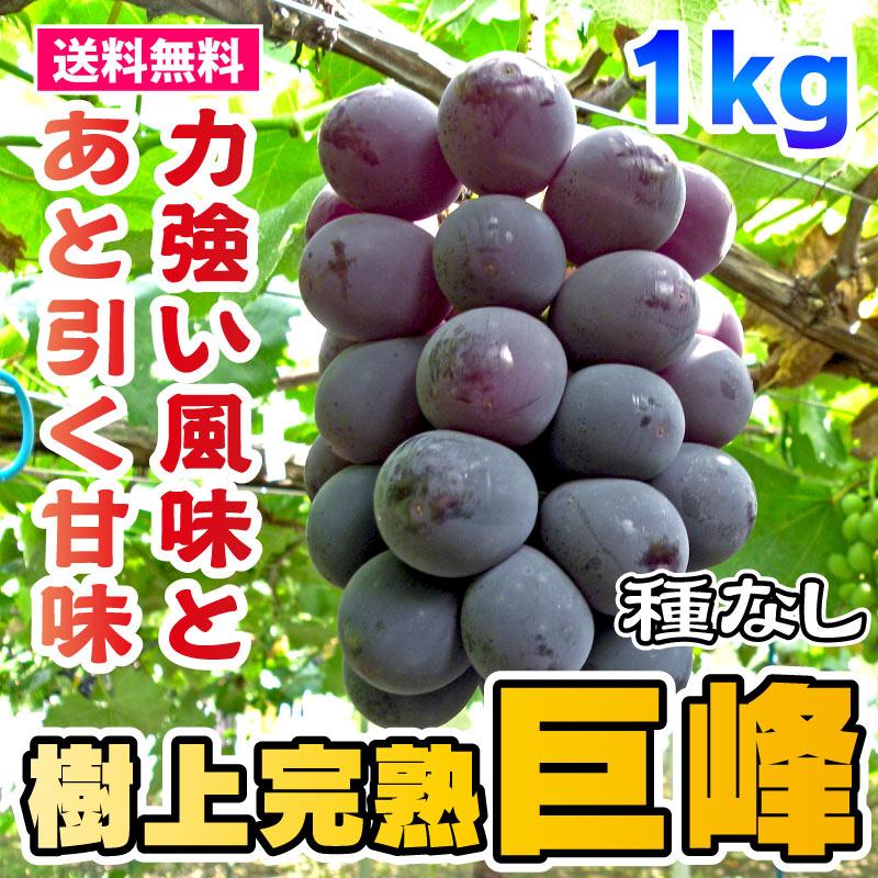 【2021年完売】ぶどう - 樹上完熟種なし巨峰 1kg [愛知] 保命園 <直送>