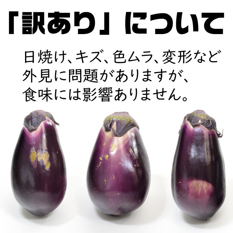 なす - 泉州水なす なにわ伝統野菜 1本 訳あり[大阪]北野農園