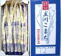 東京うど短茎「立川こまち」 1箱約2kg(6〜10本)[東京] / うど
