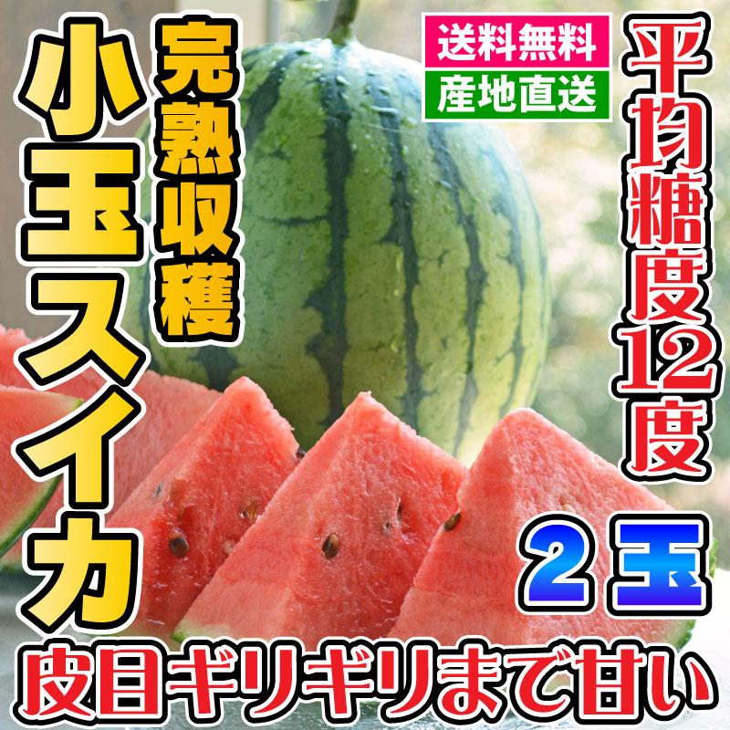 スイカ - 小玉スイカ 2Lサイズ(約3kg)×2玉[熊本] ★驚きの美味しさ