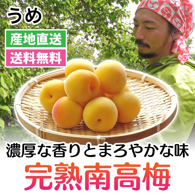 うめ - 樹上完熟南高梅 1・3・5・10kg[和歌山]藏光農園 農家直送