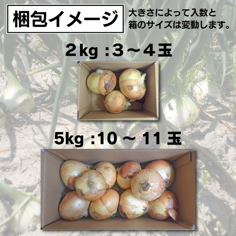 泉州たまねぎ プレミアム 1kg[大阪]長左エ門 射手矢農園 / たまねぎ