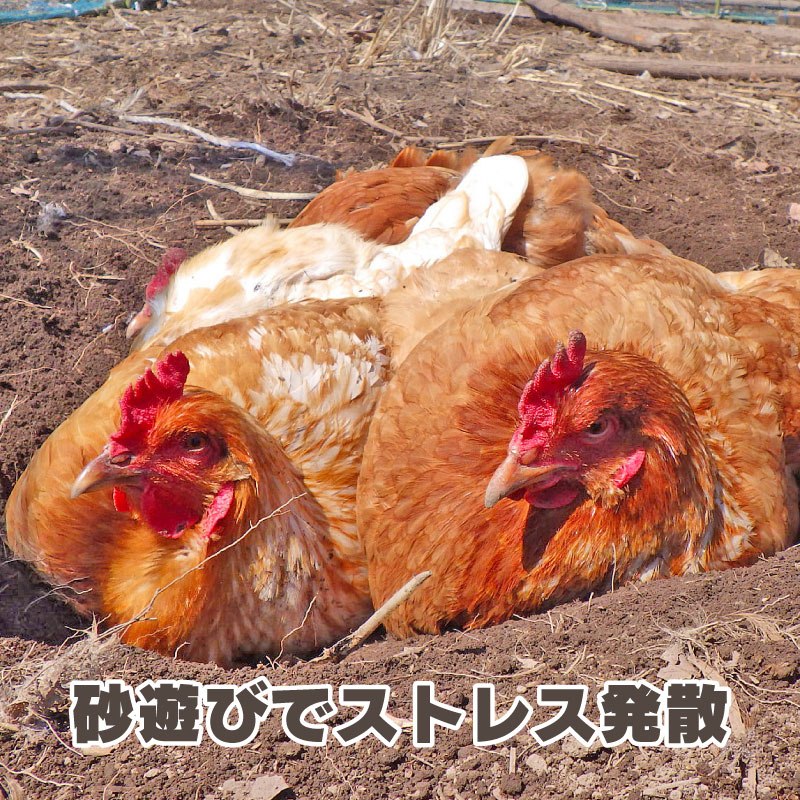 たまご - 森に囲われた放牧場で自由に育った鶏の自然卵[山梨] 百鶏園(水曜発送限定)