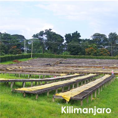 キリマンジャロ AAキボー 100g