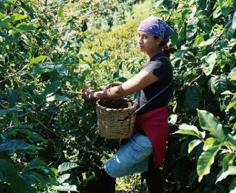 【数量限定商品】ニカラグア カサブランカ 300g(2/25〜発送)