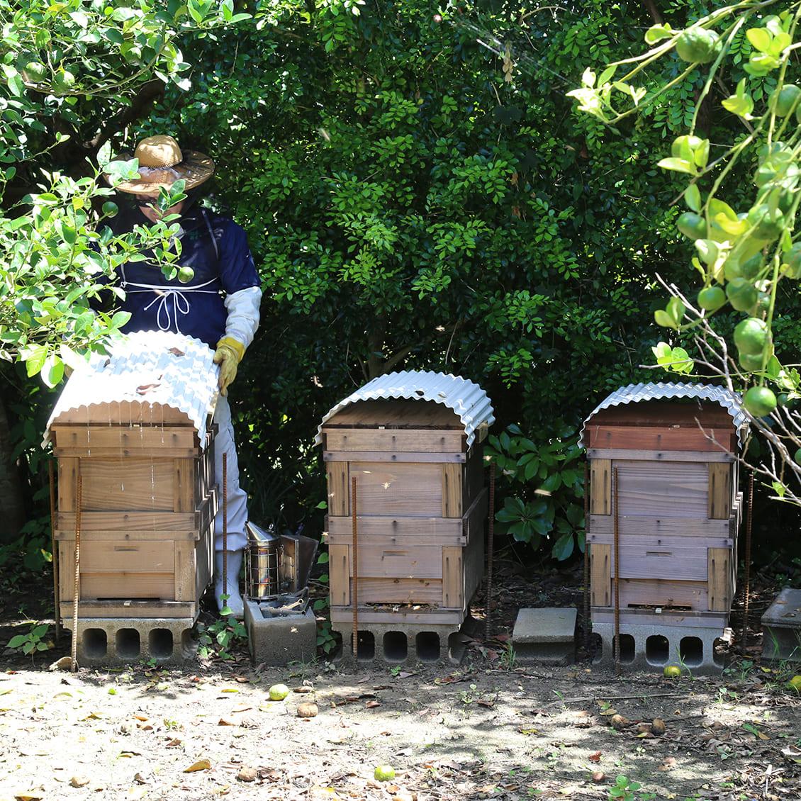 【味くらべ】 喜界島はちみつ 2種 ごまの花・百花蜜
