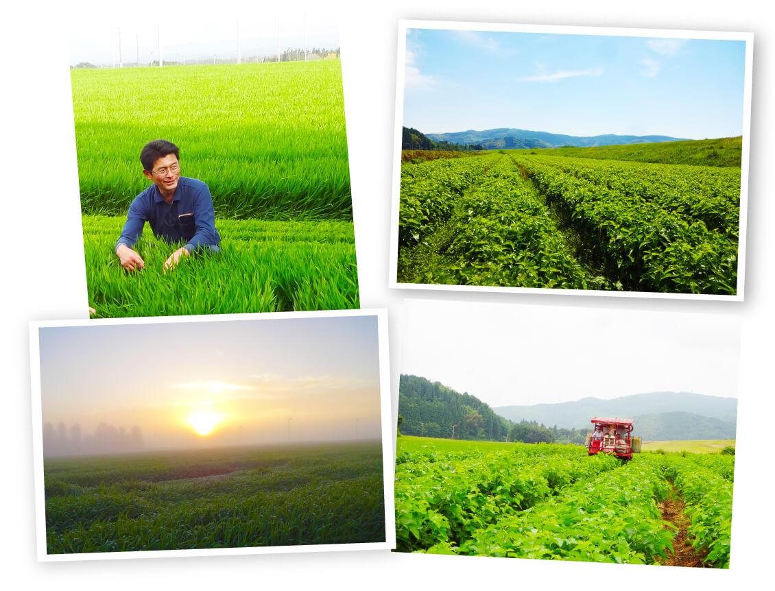 【新入荷】日々美人30包 鹿児島県産シルク桑と大麦若葉のやさしい青汁 フィッシュコラーゲン入り