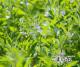 【送料無料】「ごまの花」 島の太陽と潮風で育ったはちみつ 5個セット (国産 喜界島の純粋はちみつ)