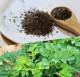 【機能性表示食品】喜界島 長命草茶 100g (50杯分) 【送料無料】